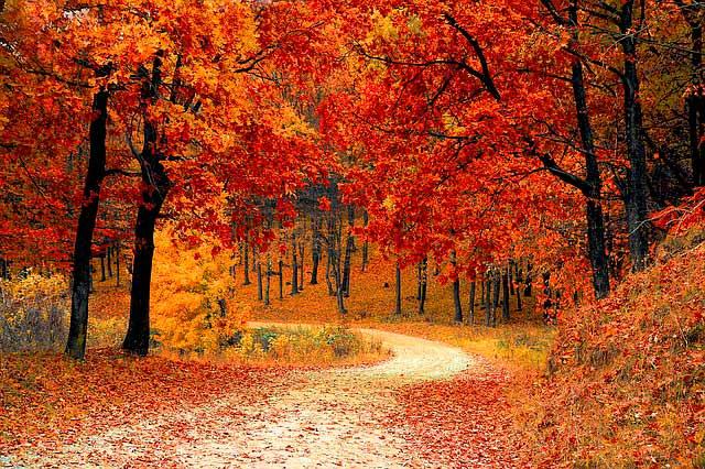 aceites para otoño