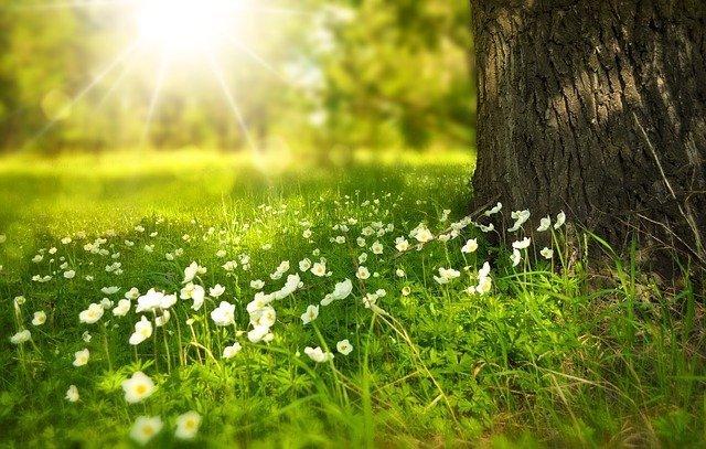 aceites para primavera