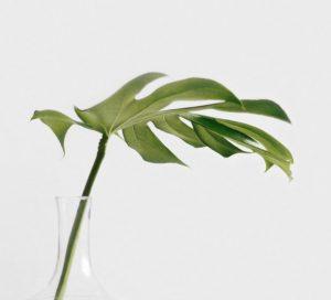 aceites esenciales de eucalipto - esencias para humidificadores