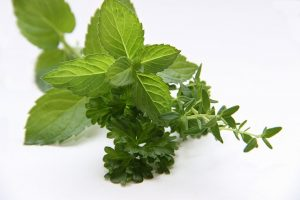 aceite esencia de menta para humidificador