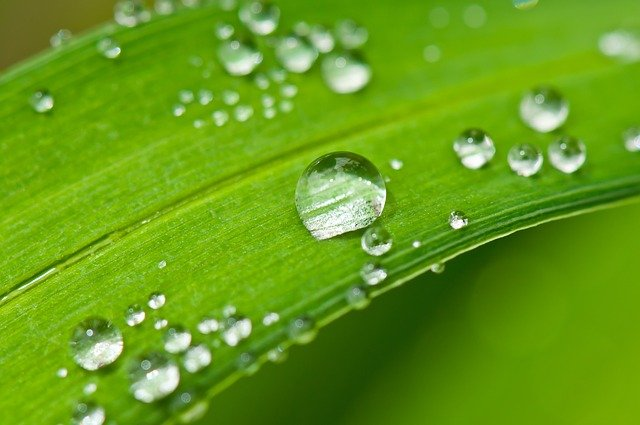 humedad de las plantas