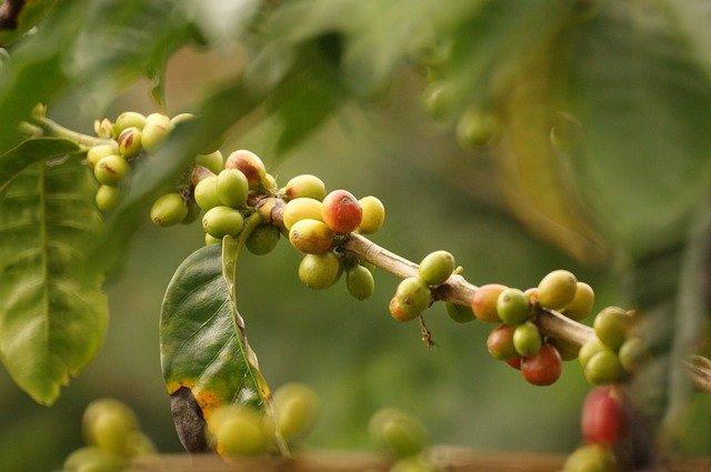 Planta de café purificadora