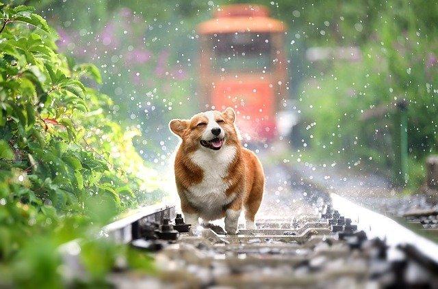 perro disfrutando de la humedad